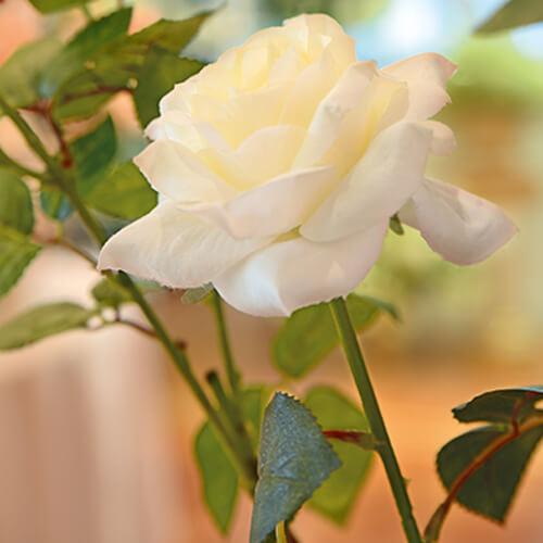 Image Willkommen in der »Wir welken nicht« -Blumenboutique